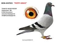 POPPY - GRACE